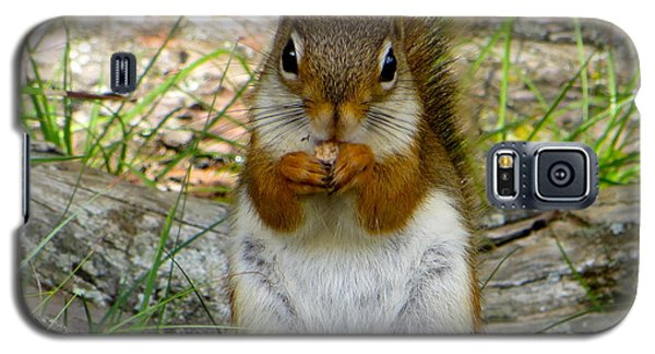 Red Squirrel Eating Peanut Butter And Jelly Galaxy S5 Case