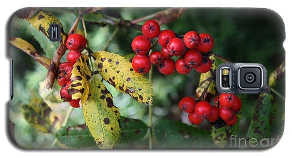 Red Summer Berries - Whistler Galaxy S5 Case