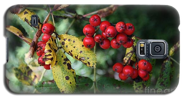 Galaxy S5 Case featuring the photograph Red Summer Berries - Whistler by Amanda Holmes Tzafrir