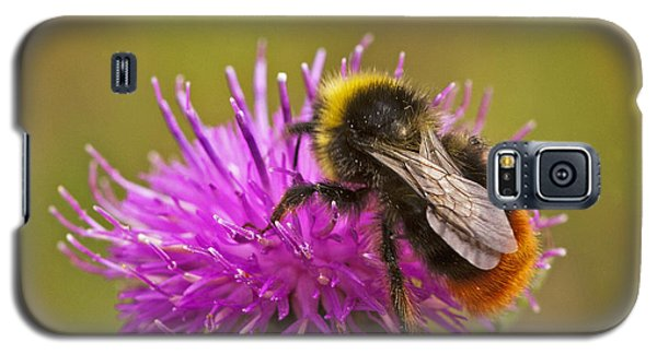 Galaxy S5 Case featuring the photograph Red Tail Bumble Bee by Paul Scoullar