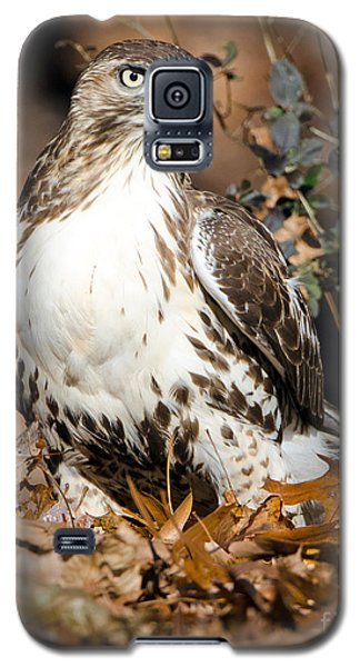 Red Tail Daze Galaxy S5 Case by Stephen Flint