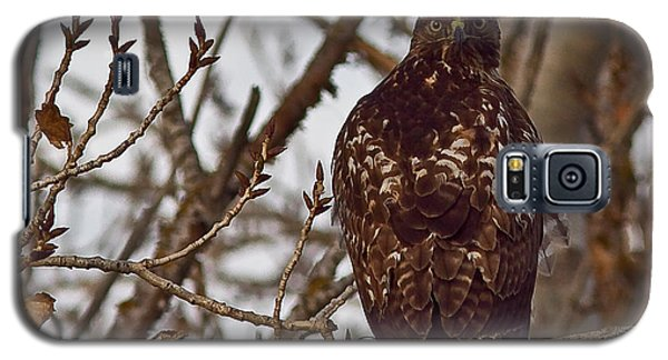 Galaxy S5 Case featuring the photograph Red Tail Hawk by Brian Williamson