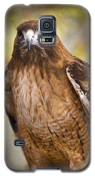 Eyes Of The Raptor Galaxy S5 Case