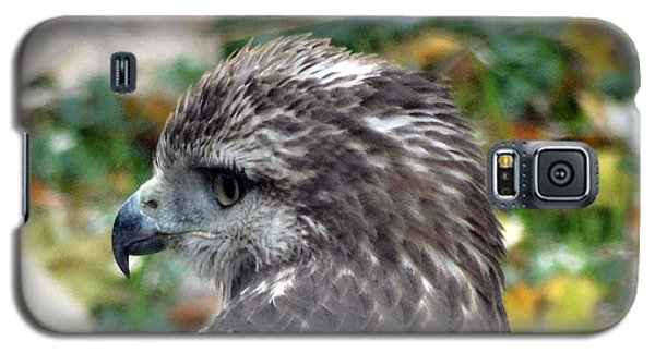Red Tail Hawk Head Shot Galaxy S5 Case