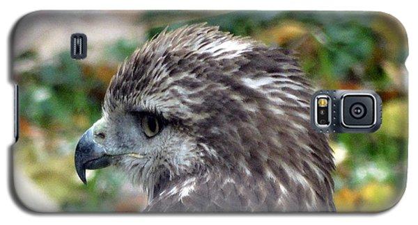 Red Tail Hawk Head Shot Galaxy S5 Case