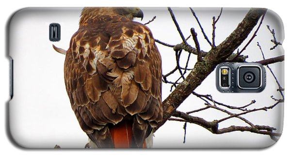 Red Tail Hawk In Winter Galaxy S5 Case