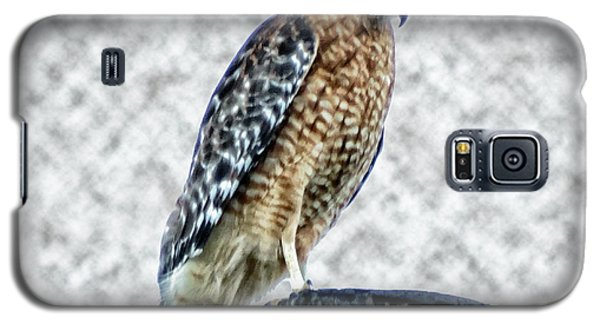 Red Tail Hawk Looking Down Galaxy S5 Case