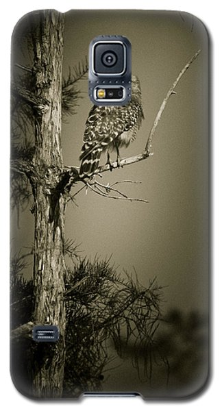 Red Tail Hawk On Loop Road Galaxy S5 Case