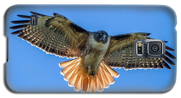 Red Tail Hawk Galaxy S5 Case