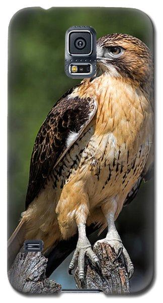 Red Tail Hawk Portrait Galaxy S5 Case