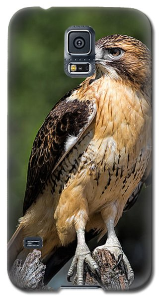 Red Tail Hawk Portrait Galaxy S5 Case