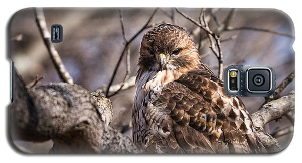 Red-tail Hawk Stare Galaxy S5 Case
