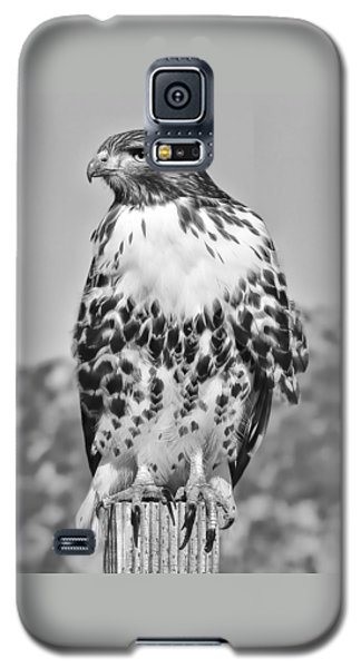 Red Tail Hawk Youth Black And White Galaxy S5 Case