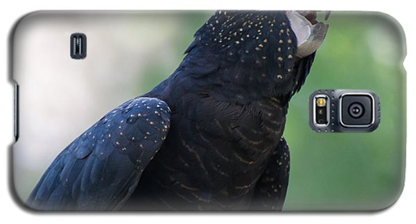 Red-tailed Black Cockatoo Galaxy S5 Case