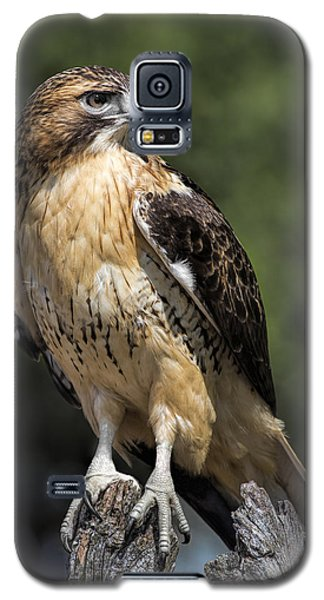 Red Tailed Hawk Galaxy S5 Case by Dale Kincaid