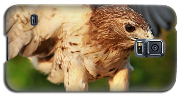 Red Tailed Hawk Hunting Galaxy S5 Case by Dan Sproul
