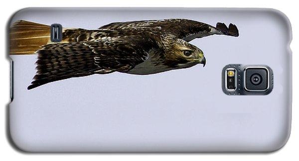 Red-tailed Hawk In Flight 2 Galaxy S5 Case