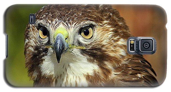Galaxy S5 Case featuring the photograph Red Tailed Hawk by Lisa L Silva