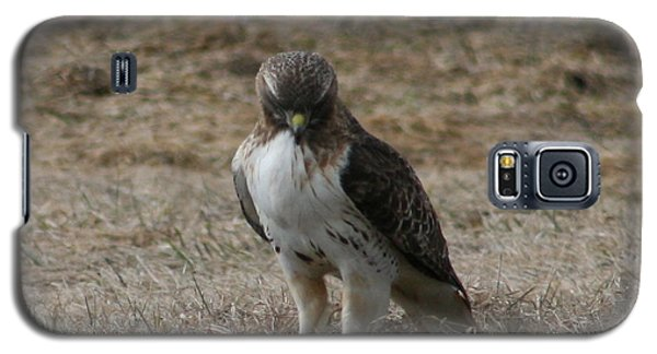 Galaxy S5 Case featuring the photograph Red Tailed Hawk by Neal Eslinger