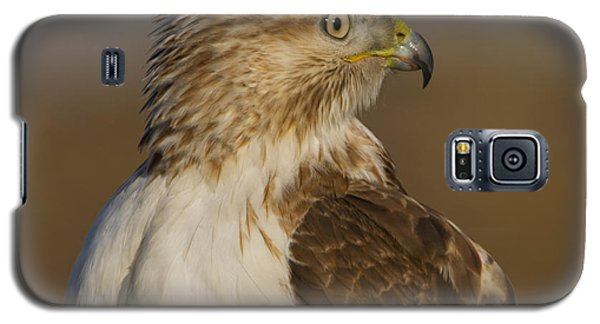 Red-tailed Hawk Portrait Galaxy S5 Case