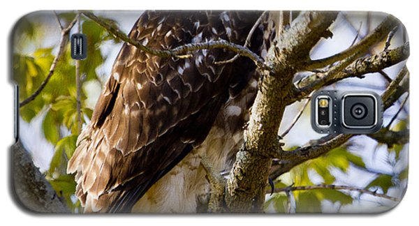 Galaxy S5 Case featuring the photograph Red Tailed-hawk by Ricky L Jones