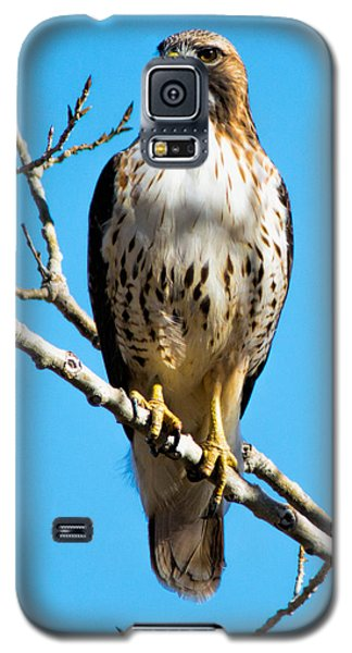 Red Tailed Hawk Standing Tall Galaxy S5 Case