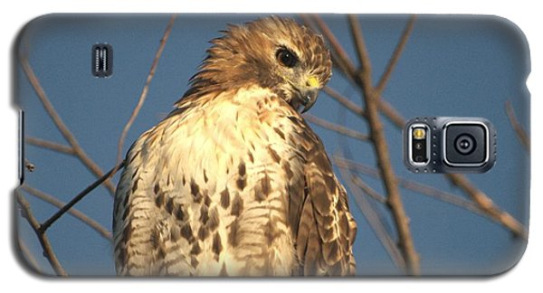 Galaxy S5 Case featuring the photograph Red Tailed Hawk  by Susan  Dimitrakopoulos
