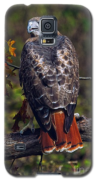 Hawk Galaxy S5 Case - Red Tailed Hawk by Todd Bielby