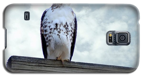 Red Tailed Hawk Waiting Galaxy S5 Case