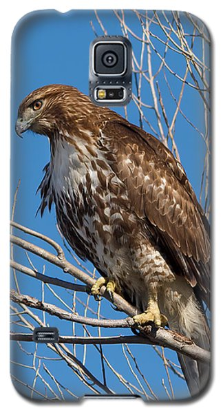 Red-tailed Hawk Watching The Ducks Galaxy S5 Case