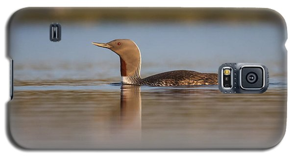 Red-throated Diver Gavia Stellata Galaxy S5 Case