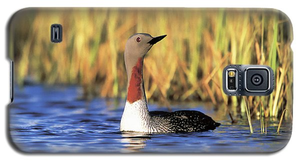 Red-throated Loon Galaxy S5 Case by Paul J. Fusco