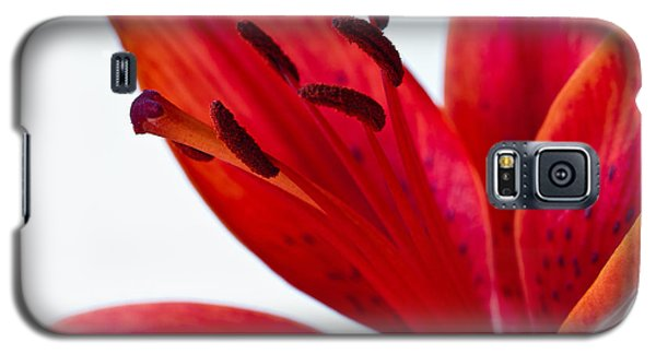 Red Tiger Lily Galaxy S5 Case