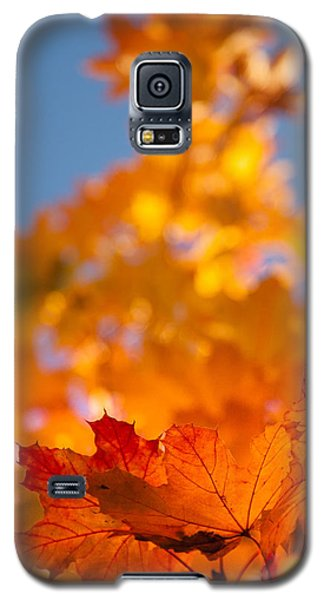 Red Tipped Gold Galaxy S5 Case