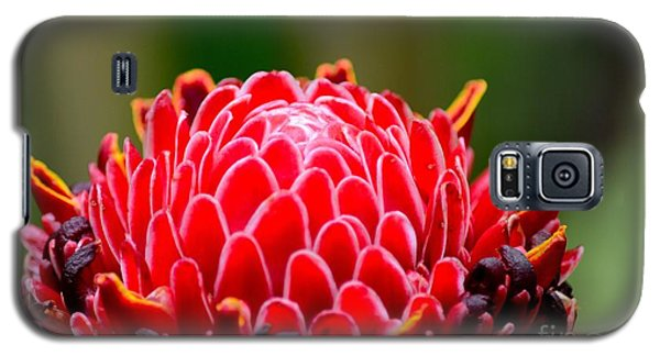 Red Torch Ginger Flower Head From Tropics Singapore Galaxy S5 Case