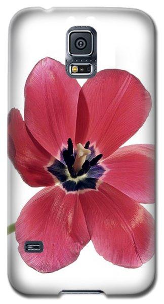 Red Transparent Tulip Galaxy S5 Case