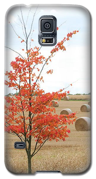 Red Tree Galaxy S5 Case