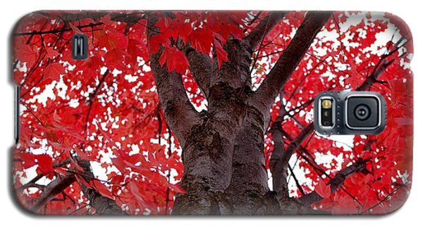 Red Tree Of Autumn Galaxy S5 Case