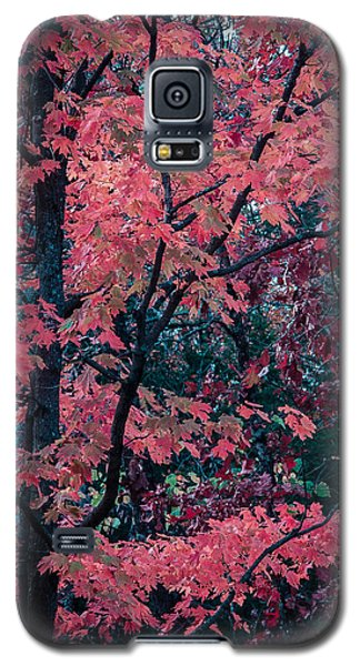 Galaxy S5 Case featuring the photograph Red Tree by Wayne Meyer