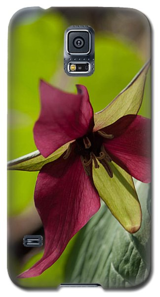 Galaxy S5 Case featuring the photograph Red Trillium - Glspla659 by G L Sarti