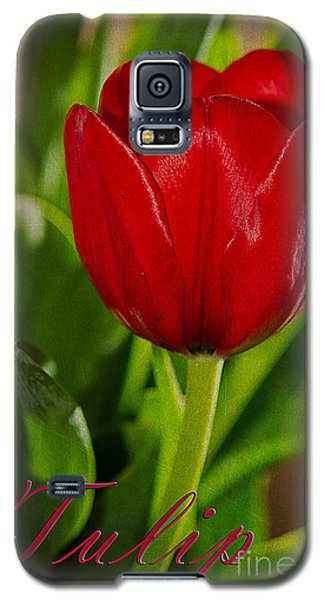 Red Tulip Galaxy S5 Case by MaryJane Armstrong