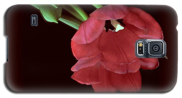 Red Tulip On Burgundy Galaxy S5 Case