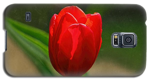 Red Tulip Spring Flower Galaxy S5 Case by Tracie Kaska