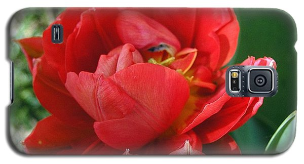 Galaxy S5 Case featuring the photograph Red Tulip by Vesna Martinjak