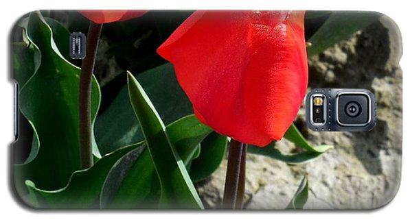 Red Tulips Galaxy S5 Case by Karen Molenaar Terrell
