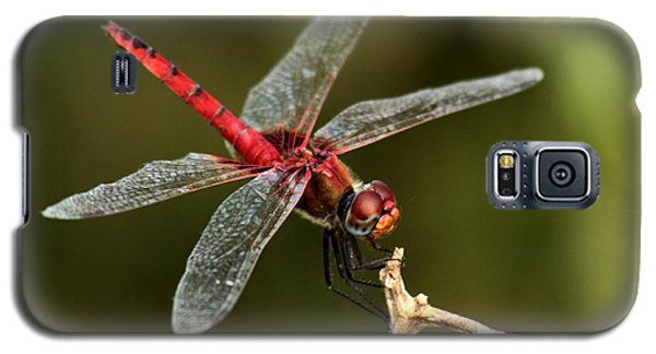 Red-veined Darter  - My Joystick Galaxy S5 Case
