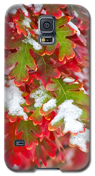 Galaxy S5 Case featuring the photograph Red White And Green by Ronda Kimbrow