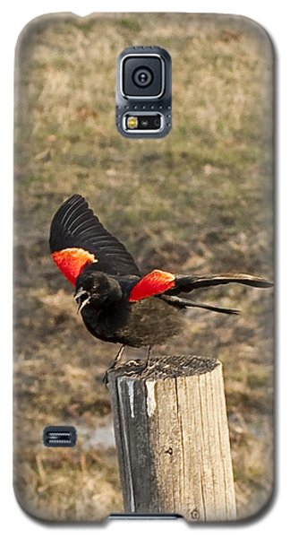 Red Wiing Mating Display Galaxy S5 Case by Daniel Hebard