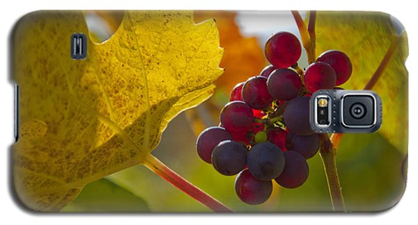 Red Wine Grapes Galaxy S5 Case