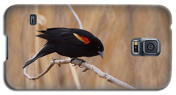 Red Winged Blackbird 1 Galaxy S5 Case by Ernie Echols
